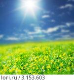 Купить «Желтые весенние цветы. Гусиный лук (Gagea lutea)», фото № 3153603, снято 10 мая 2011 г. (c) Иван Михайлов / Фотобанк Лори