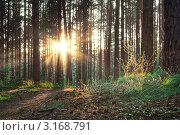 Купить «Рассвет в лесу», фото № 3168791, снято 15 августа 2009 г. (c) vlntn / Фотобанк Лори