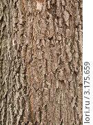 Кора лиственного дерева. Стоковое фото, фотограф Сергей Жинко / Фотобанк Лори