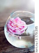 Дикая роза в круглой прозрачной вазе. Стоковое фото, фотограф Анастасия Егоньян / Фотобанк Лори
