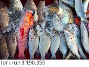 Купить «Разная рыба среди льда на магазинном прилавке», фото № 3190355, снято 28 декабря 2011 г. (c) Яков Филимонов / Фотобанк Лори