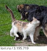 Кошка нежничает с собакой. Стоковое фото, фотограф Нина Ефремова / Фотобанк Лори
