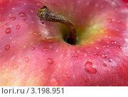 Красное спелое яблоко в каплях воды. Стоковое фото, фотограф Роман Ушаков / Фотобанк Лори