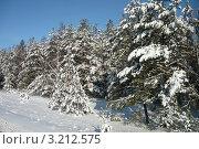 Зимний лес. Стоковое фото, фотограф Елена Ерёменко / Фотобанк Лори