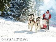 Купить «Бегущая упряжка аляскинских маламутов», фото № 3212975, снято 14 декабря 2018 г. (c) Дмитрий Калиновский / Фотобанк Лори