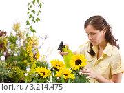Купить «Задумчивая девушка опрыскивает подсолнухи из пульверизатора», фото № 3214475, снято 1 мая 2010 г. (c) CandyBox Images / Фотобанк Лори