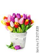 Купить «Букет из свежих тюльпанов разных цветов в горшке на белом фоне», фото № 3217839, снято 15 января 2012 г. (c) Наталия Кленова / Фотобанк Лори