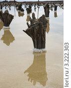 Купить «Озеро Баскунчак, остатки старого настила для соли», фото № 3222303, снято 4 мая 2011 г. (c) Надежда Болотина / Фотобанк Лори