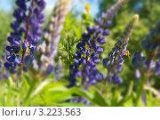 Пчела на лугу. Стоковое фото, фотограф Айгуль Лотфуллина / Фотобанк Лори
