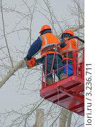 Купить «Кронирование деревьев», фото № 3236711, снято 25 ноября 2011 г. (c) макаров виктор / Фотобанк Лори