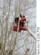 Купить «Кронирование деревьев», фото № 3236719, снято 25 ноября 2011 г. (c) макаров виктор / Фотобанк Лори