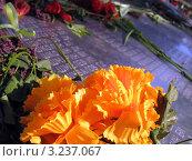 Купить «Мемориальные таблички», фото № 3237067, снято 17 ноября 2018 г. (c) RuS / Фотобанк Лори