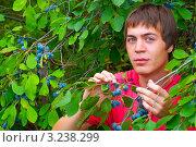 Мужчина собирает терн (2011 год). Редакционное фото, фотограф Елена Алексеева / Фотобанк Лори
