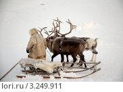 Чукча и олени. Стоковое фото, фотограф Максим Егорычев / Фотобанк Лори