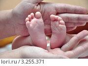 Купить «Ножки новорожденного», фото № 3255371, снято 14 февраля 2012 г. (c) Мастепанов Павел / Фотобанк Лори