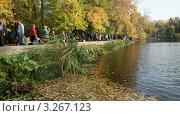 Деревья с желтыми листьями на берегу пруда. Редакционное видео, видеограф Виктор Тараканов / Фотобанк Лори