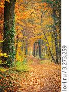 Купить «Тропинка в осеннем лесу», фото № 3273259, снято 15 октября 2018 г. (c) Sergey Borisov / Фотобанк Лори