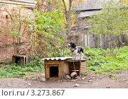 Купить «Сторож. Собака стоит на будке», фото № 3273867, снято 9 октября 2011 г. (c) Илюхина Наталья / Фотобанк Лори