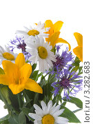 Букет красивых цветов на белом фоне. Стоковое фото, фотограф Елена Блохина / Фотобанк Лори