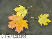 Осенние листья. Стоковое фото, фотограф Маргарита Смирнова / Фотобанк Лори