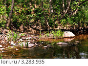 Лесной ручей. Стоковое фото, фотограф Маргарита Смирнова / Фотобанк Лори