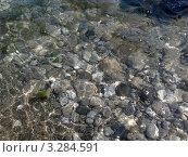 Морское дно с галькой. Стоковое фото, фотограф kraser / Фотобанк Лори