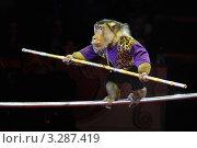 Цирковое представление с обезьянами в Московском государственном цирке имени Никулина на Цветном бульваре (2012 год). Редакционное фото, фотограф Андрей Дегтярёв / Фотобанк Лори