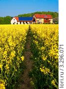 Купить «Поле с цветущим рапсом на фоне фермы и голубого неба», фото № 3296071, снято 1 мая 2011 г. (c) Аnna Ivanova / Фотобанк Лори