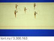 Купить «Художественная гимнастика, несколько спортсменок выполняют упражнения с обручами», фото № 3300163, снято 25 сентября 2010 г. (c) Losevsky Pavel / Фотобанк Лори