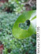 Лист с прогрызанной дырочкой в форме сердечка. Стоковое фото, фотограф Игорь Устюгов / Фотобанк Лори