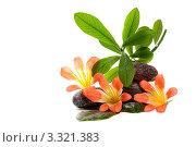 Пирамида из камней для СПА с цветами и растением на белом фоне. Стоковое фото, фотограф Константин Сидоров / Фотобанк Лори
