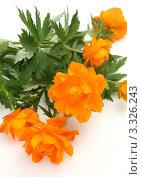 Оранжевые яркие цветы. Стоковое фото, фотограф Елена Иценко / Фотобанк Лори