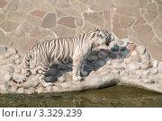Купить «Бенгальский (белый) тигр у воды», эксклюзивное фото № 3329239, снято 3 июля 2011 г. (c) Алёшина Оксана / Фотобанк Лори