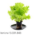 Свежий зеленый салат в пластиковом горшке. Стоковое фото, фотограф Марина Сапрунова / Фотобанк Лори