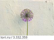 Цветок. Стоковое фото, фотограф Сергей Разживин / Фотобанк Лори