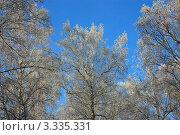 Зимний лес. Стоковое фото, фотограф Игорь Алексеенко / Фотобанк Лори