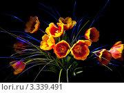 Купить «Тюльпаны на темном фоне», фото № 3339491, снято 11 марта 2012 г. (c) Михаил Ястребов / Фотобанк Лори