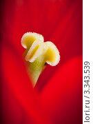 Купить «Красный тюльпан, макро», фото № 3343539, снято 14 мая 2011 г. (c) Татьяна Макотра / Фотобанк Лори