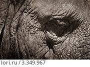 Сон. Стоковое фото, фотограф Андрей Самолинов / Фотобанк Лори