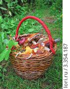 Купить «Корзина с грибами», эксклюзивное фото № 3354187, снято 29 июля 2008 г. (c) Алёшина Оксана / Фотобанк Лори