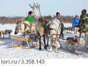 Купить «Северные олени, запряженные в нарты», фото № 3358143, снято 25 февраля 2012 г. (c) Владимир Мельников / Фотобанк Лори