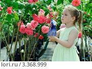 Купить «Девочка-садовник опрыскивает розы в цветочной теплице», фото № 3368999, снято 2 июня 2011 г. (c) Величко Микола / Фотобанк Лори