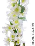 Ветка белой орхидеи. Стоковое фото, фотограф Алла Ушакова / Фотобанк Лори