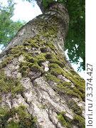 Ствол дерева. Стоковое фото, фотограф Наталья Гаврилястая / Фотобанк Лори