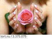 Женские руки с французским маникюром держат розу. Стоковое фото, фотограф Сергей Коршенюк / Фотобанк Лори