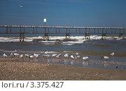 Птицы на морском берегу. Стоковое фото, фотограф Алексей Кондратьев / Фотобанк Лори
