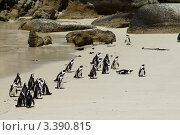 Пингвины на берегу (2012 год). Стоковое фото, фотограф Емельянов Андрей / Фотобанк Лори