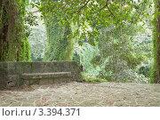 Купить «Гавана, городской парк (парк Альмендарес)», фото № 3394371, снято 17 декабря 2011 г. (c) Сергей Дубров / Фотобанк Лори