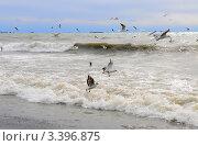 Купить «Чёрное море», эксклюзивное фото № 3396875, снято 15 марта 2012 г. (c) Юрий Морозов / Фотобанк Лори