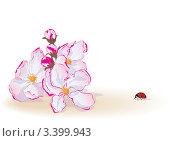 Купить «Цветы яблони и божья коровка», иллюстрация № 3399943 (c) Татьяна Петрова / Фотобанк Лори